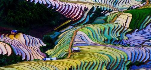 Terraced rice fields in Vietnam viewed from above, displaying the traditional flooding method of rice production.