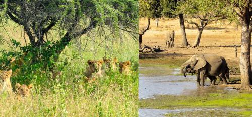 Mammal groups