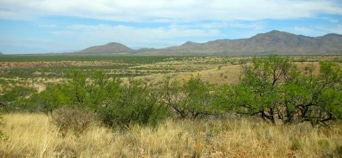 trees and shrubs and grasslands