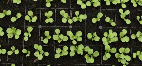 generic plants