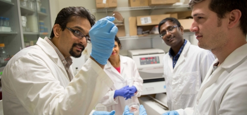 Scientists look at a tissue-repair technology in a lab
