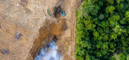 Amazon forest is clearcut