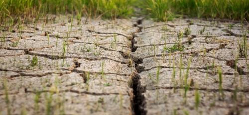 Cracked, dry earth with grass poking through.
