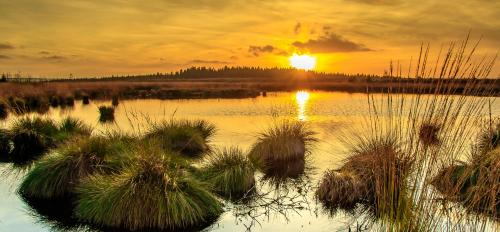 photo of sunset over a marsh
