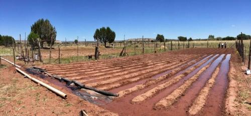 Zuni Traditional Farm