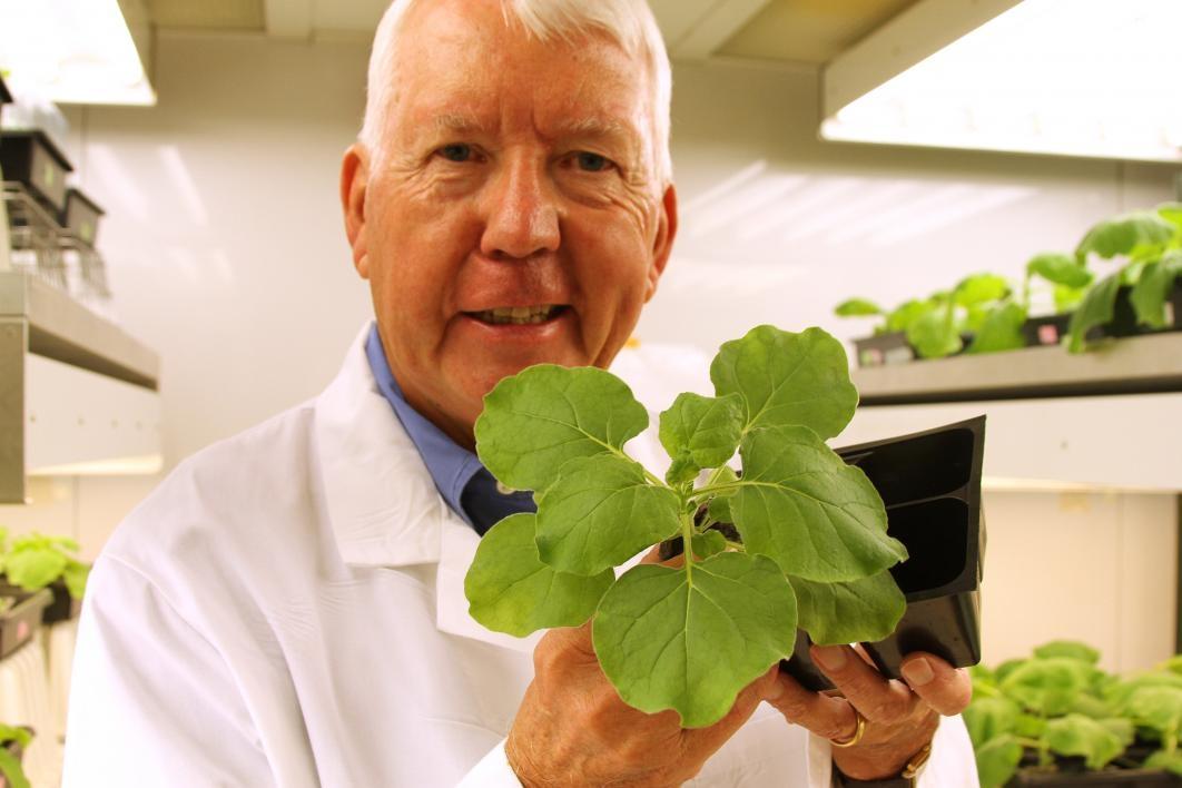 Charles Arntzen with Tobacco Plant