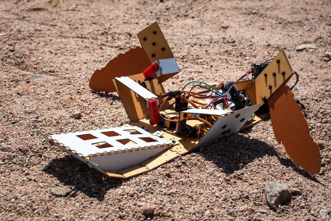 Robotic C-Turtle