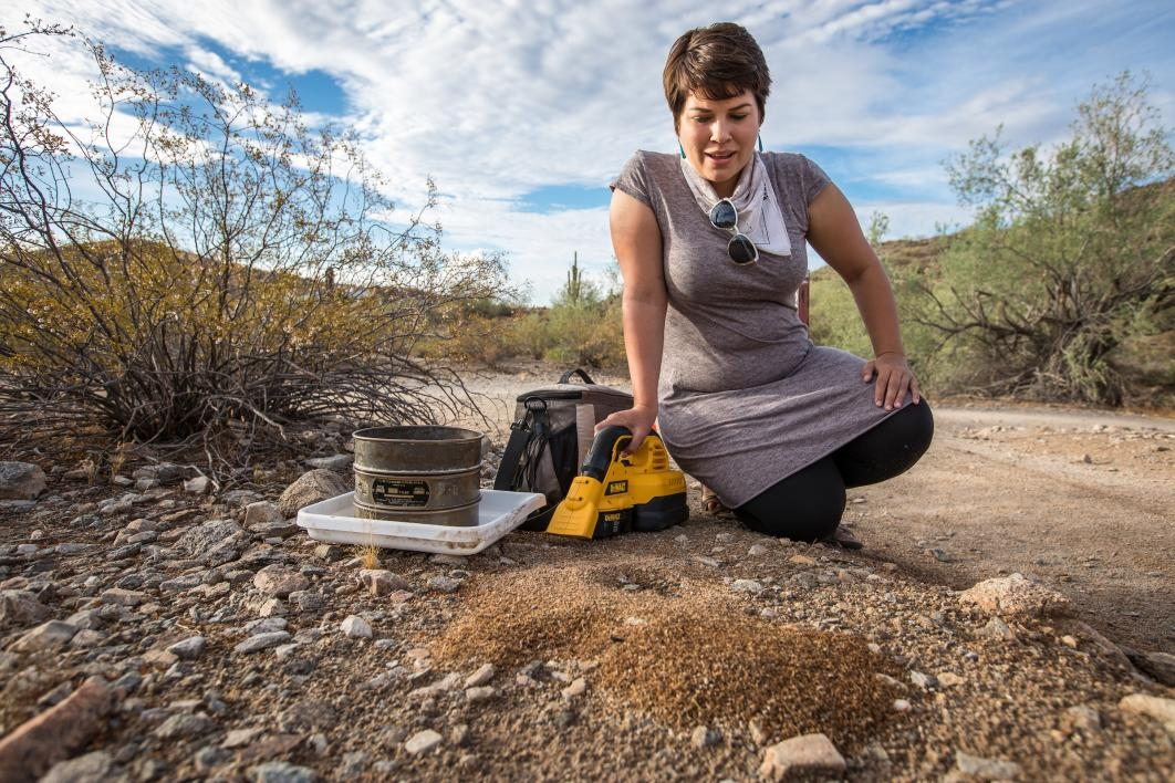 A researcher kneels near an ant colony