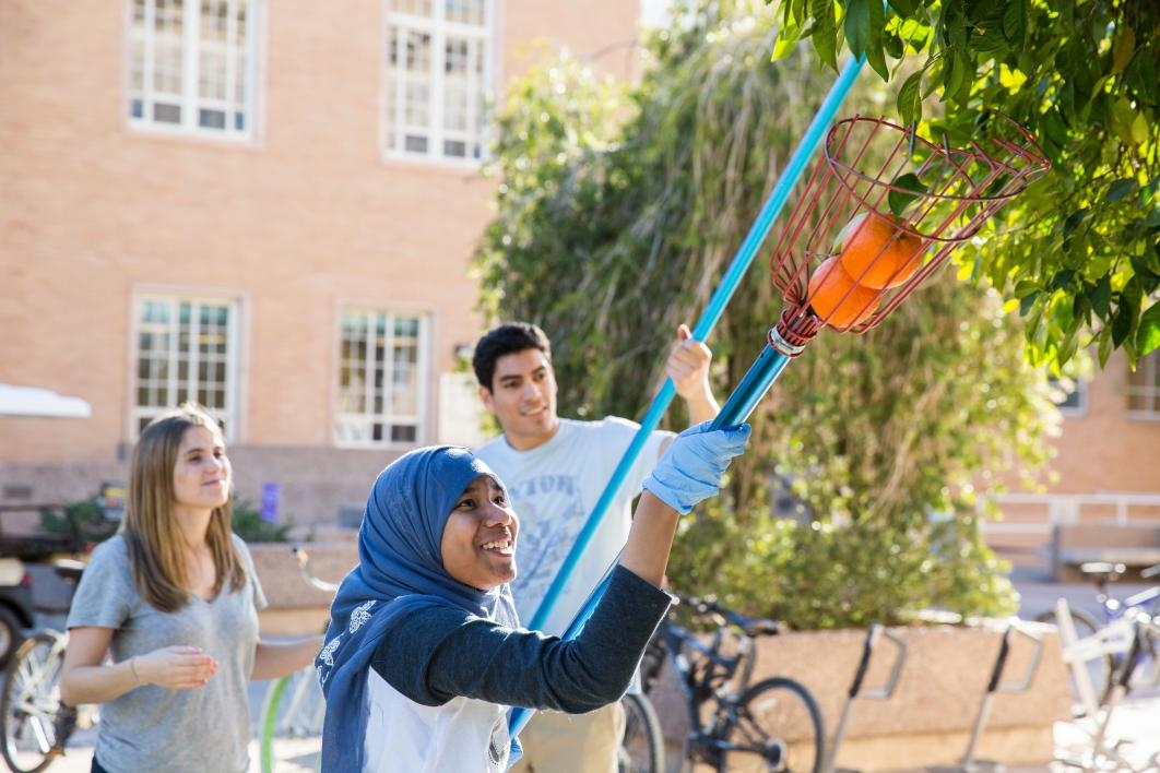 students pick seville oranges