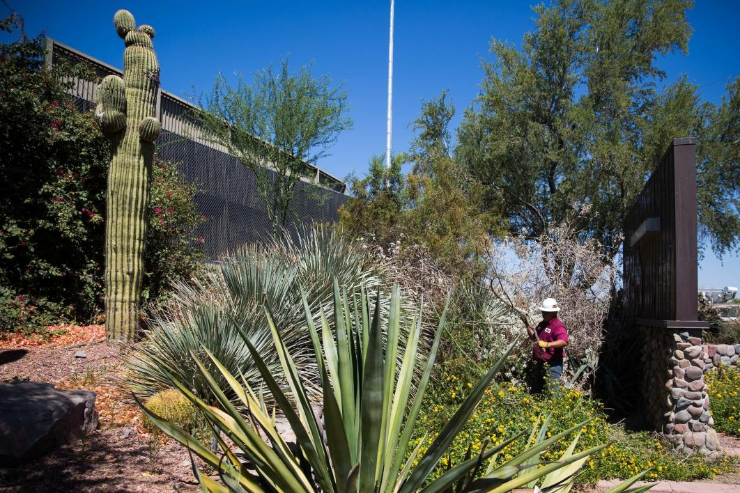 man maintaining Tempe campus grounds
