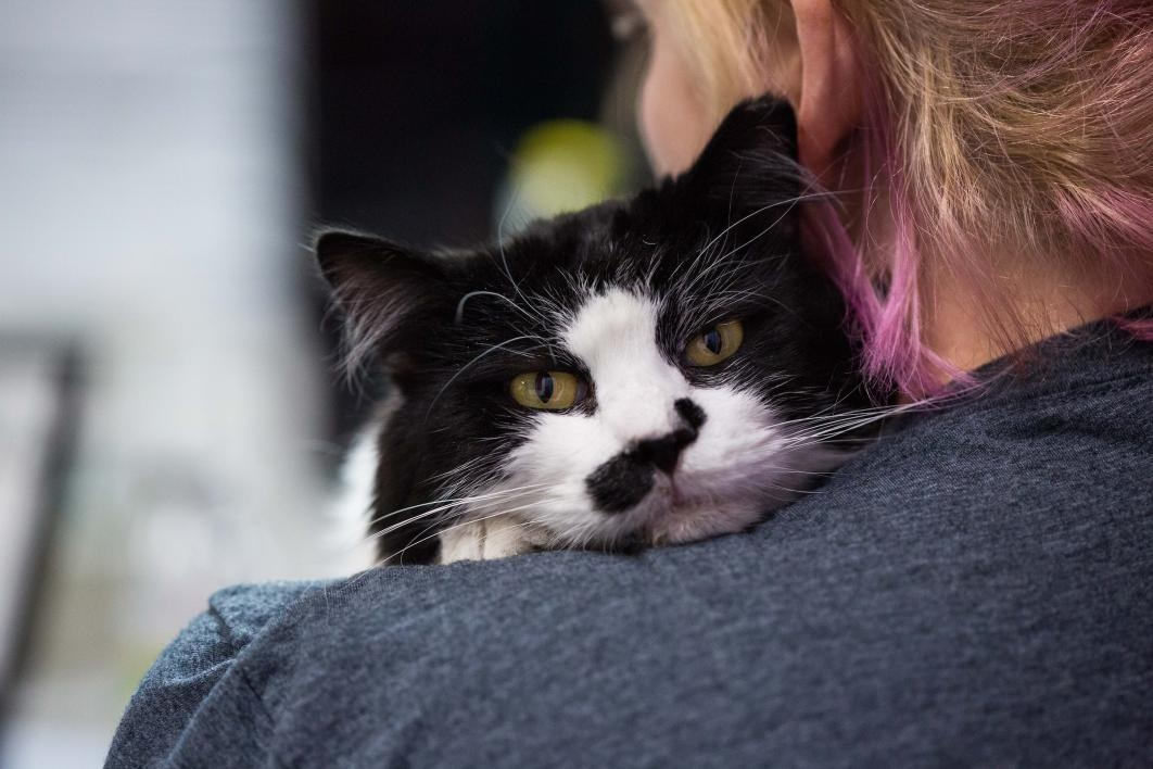 cat resting his head on a woman's shoulder
