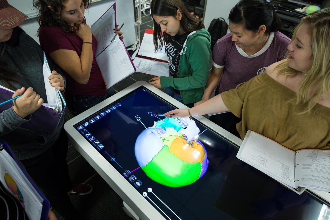 people looking at digital skull on Anatomage table