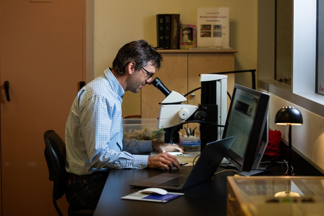 Professor Nico Franz is the curator of the Hasbrouck Insect Collection at ASU