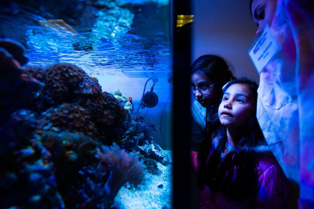 girl looking at a fish tank