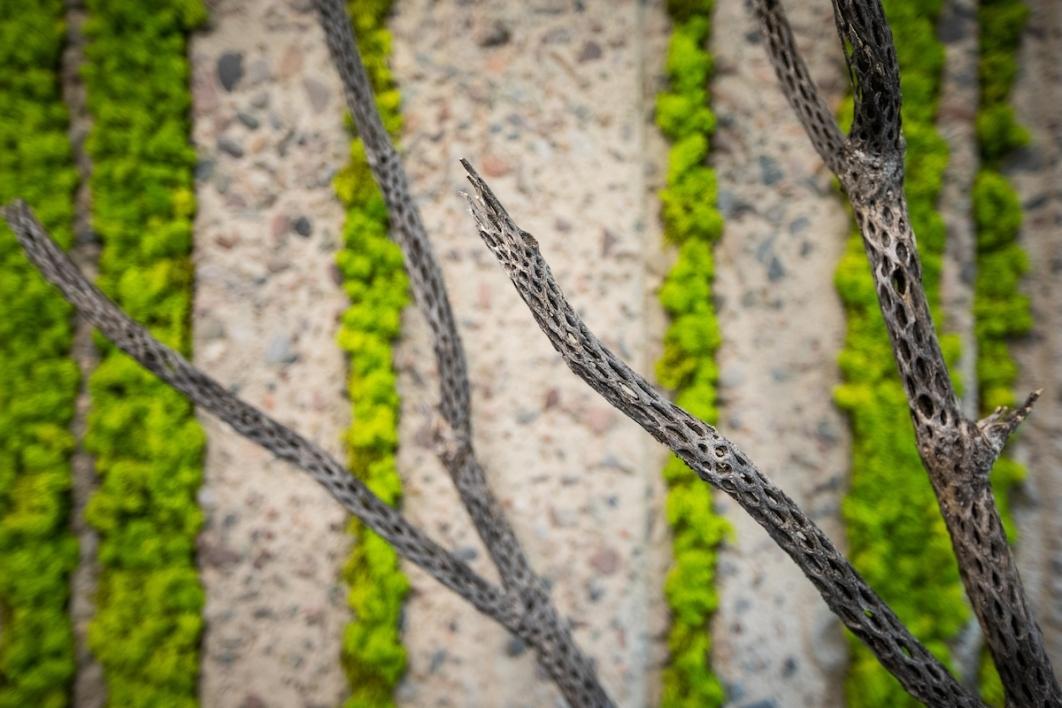 Lichen samples on Biomimicry Center's walls