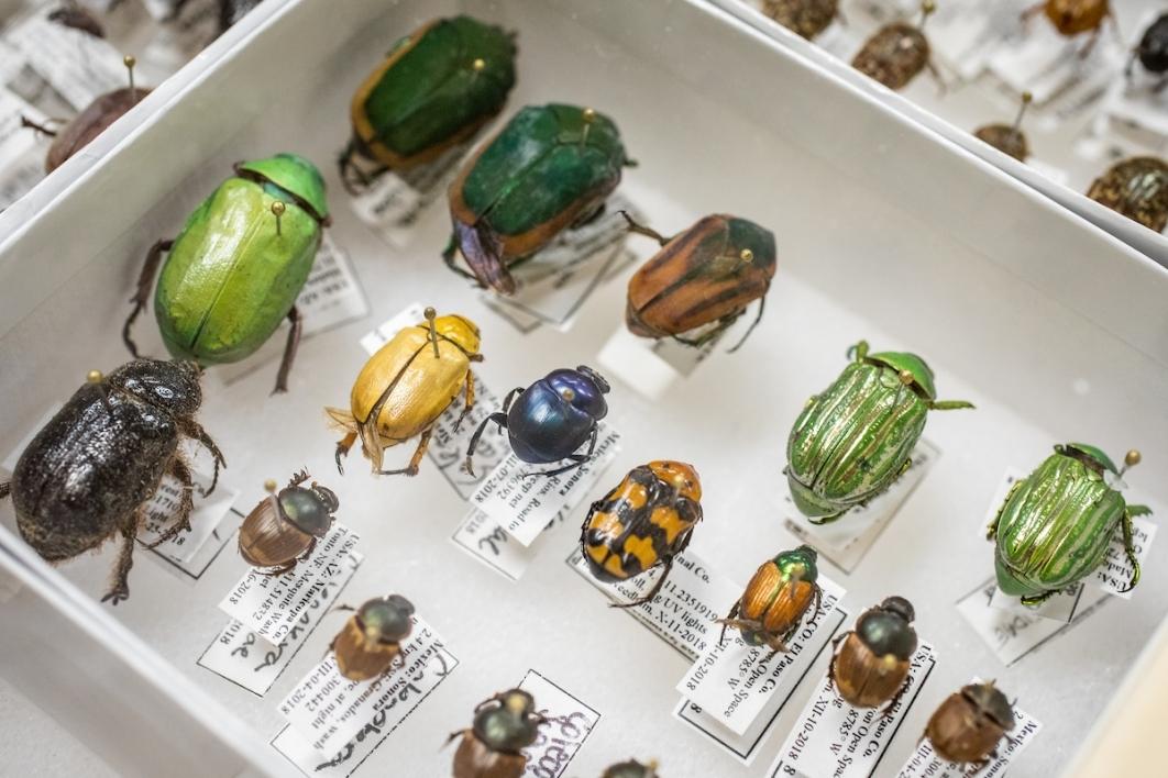 Beetles at NatureMaker