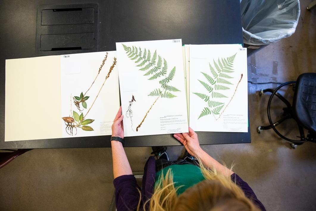 herbarium images