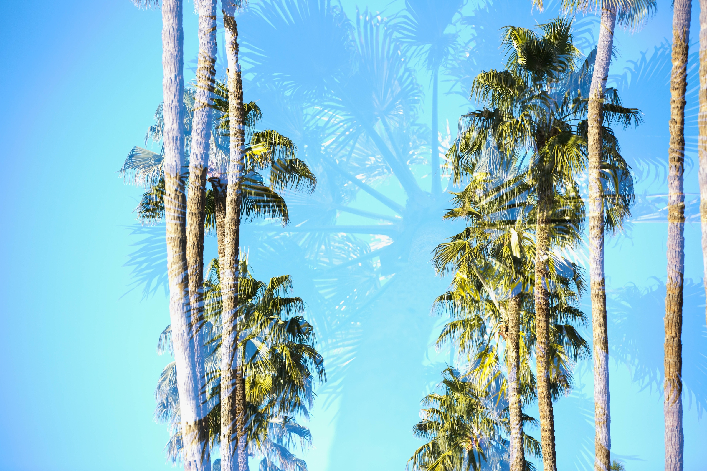 Two rows of palm trees against a bright blue sky.