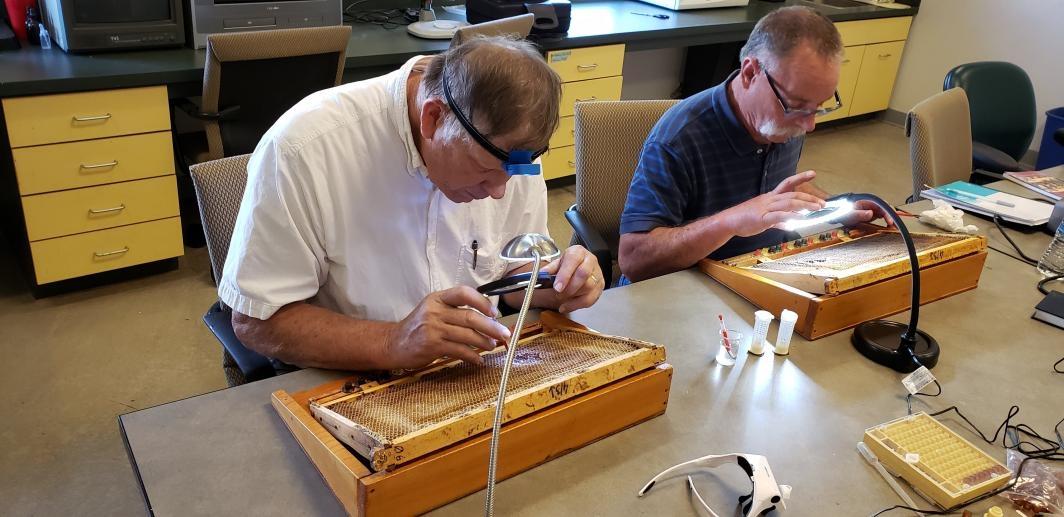 ASU continuing education beekeeping courses