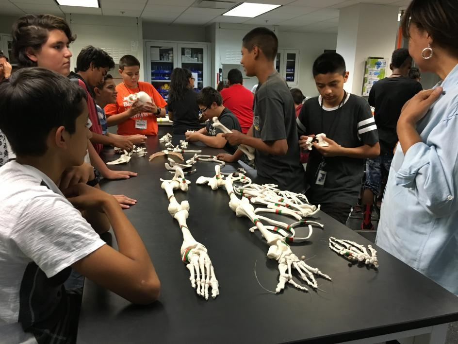 Students study a fake skeleton at the Science in the City camp.