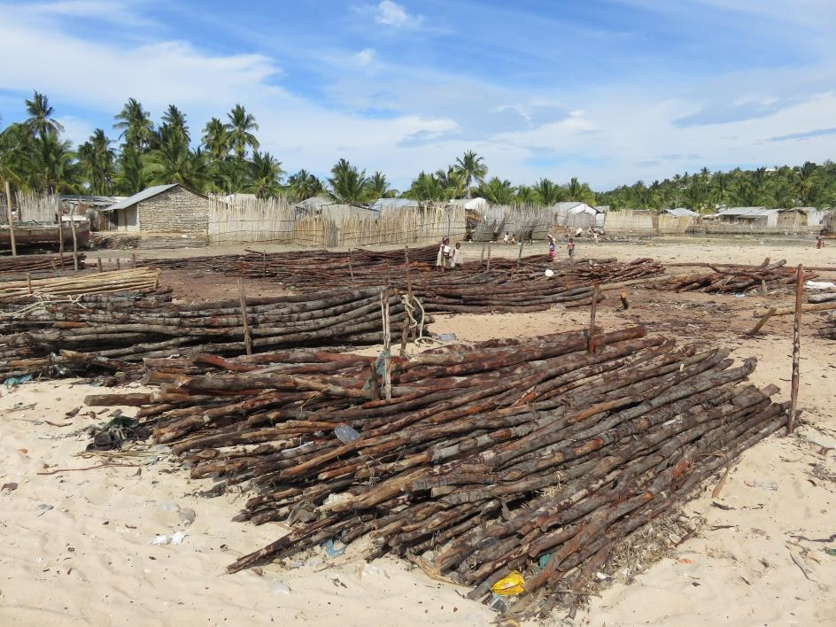 photo of drying wood from mangrove trees