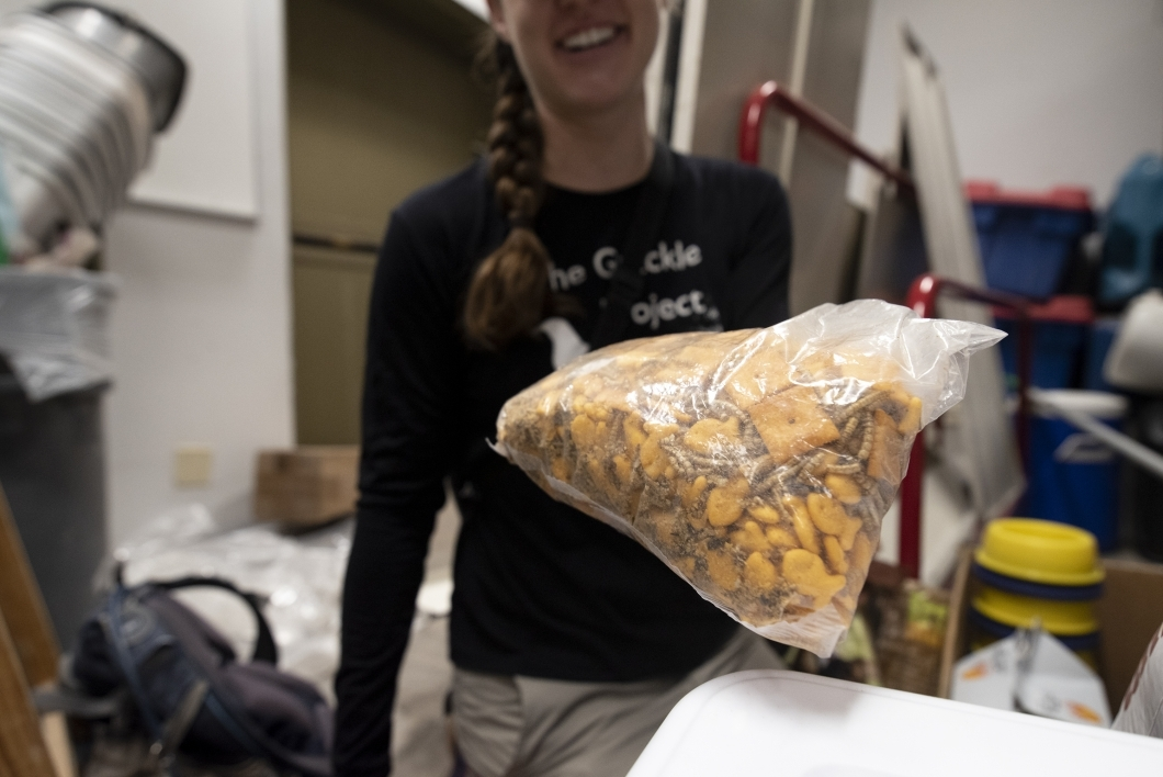 McCune shows a bag of dried worms mixed with Cheez-Its used in the grackle traps around campus. The team has observed that Arizona grackles have adapted to eat anything they can find in urban environments, and it some cases prefer human food.