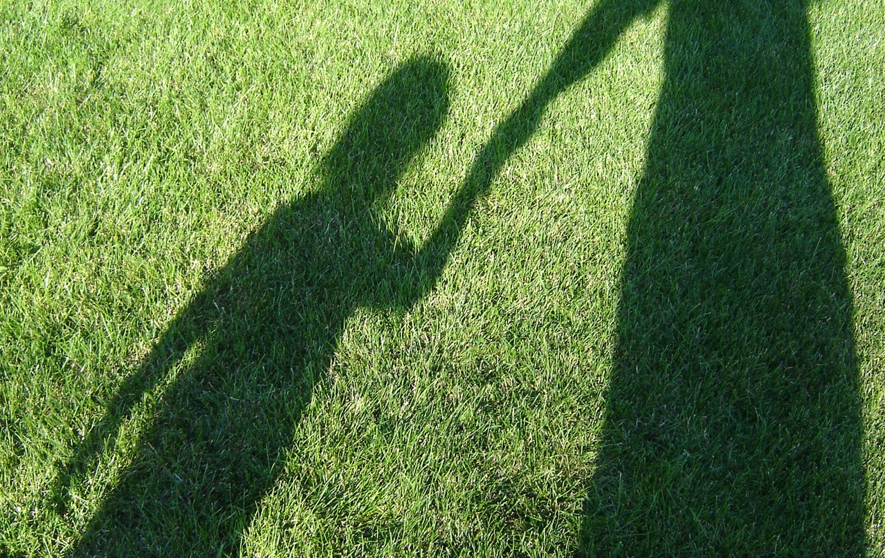 Shadows stalking some grass.