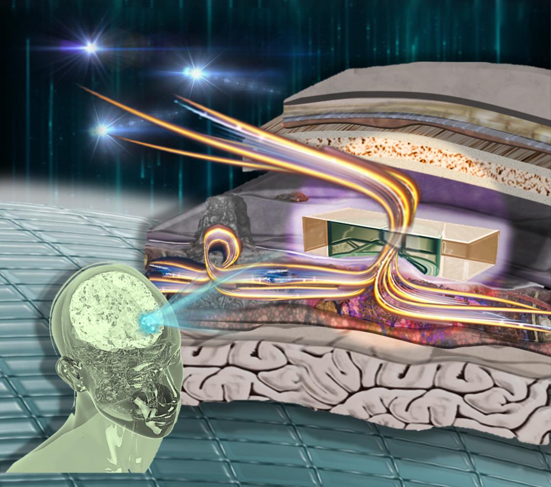 illustration of inside of brain