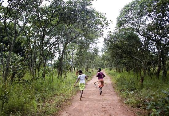 Girls run down path to bean field