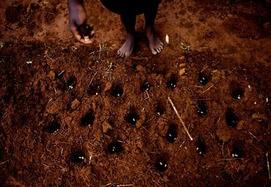 Planting a bean field