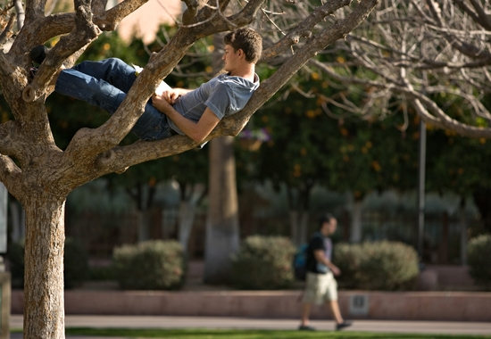 student sitting in a tree