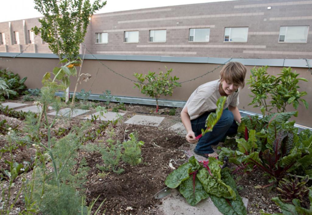 person tending garden