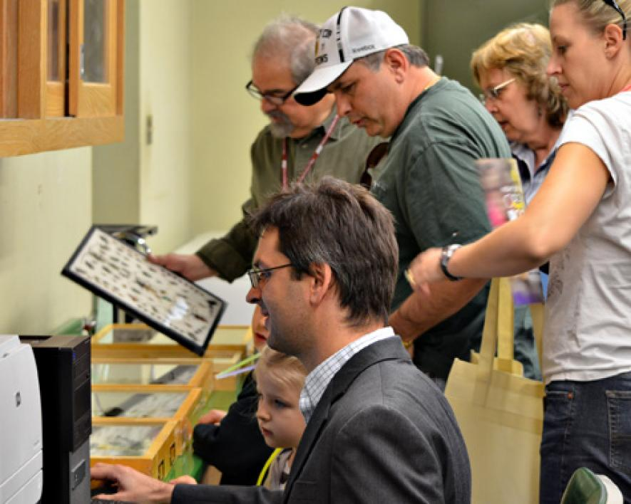 people looking at insect collection
