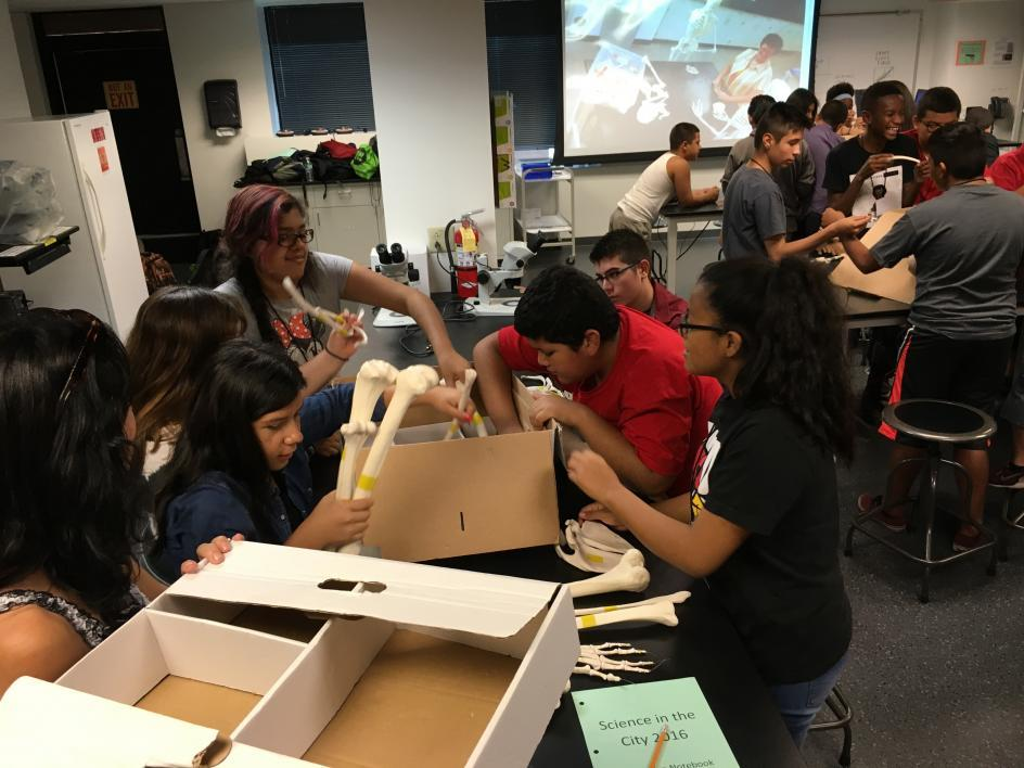 Science in the City students excitedly unpack the boxes of bones