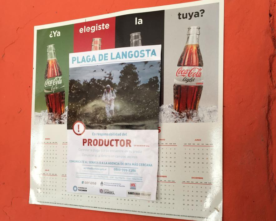 A poster about the locust outbreak hangs in an Argentina restaurant
