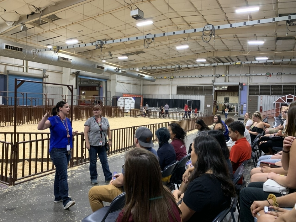 Students learn about livestock at the Arizona State Fair