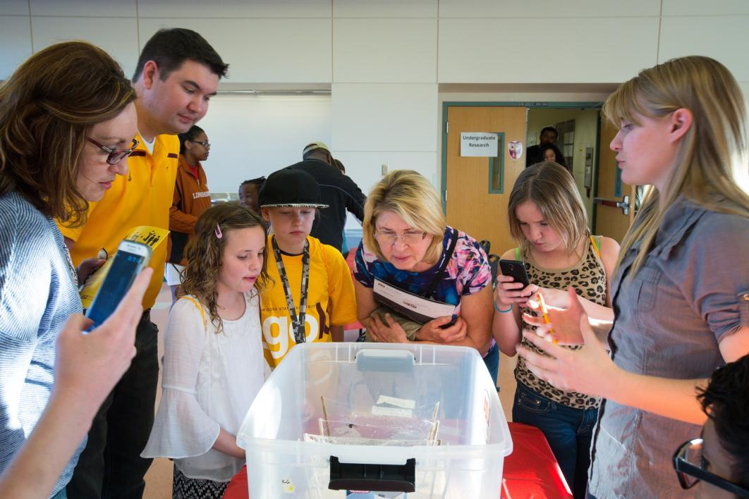 people looking at black widow spiders in a tub