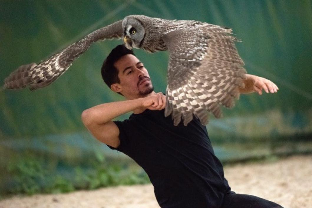 animal handler and owl