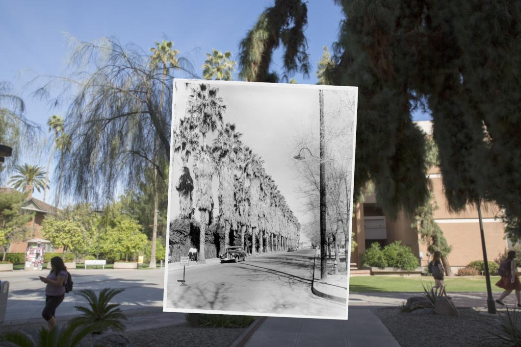 Palm Walk then and now.