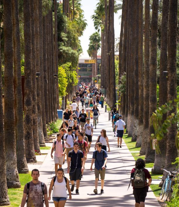 Palm Walk in 2015
