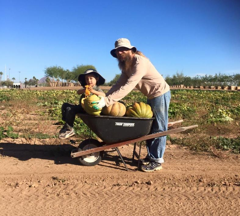 Shaffer and his son harvest pumpkins at a Agave Farms Community Garden in Phoenix.