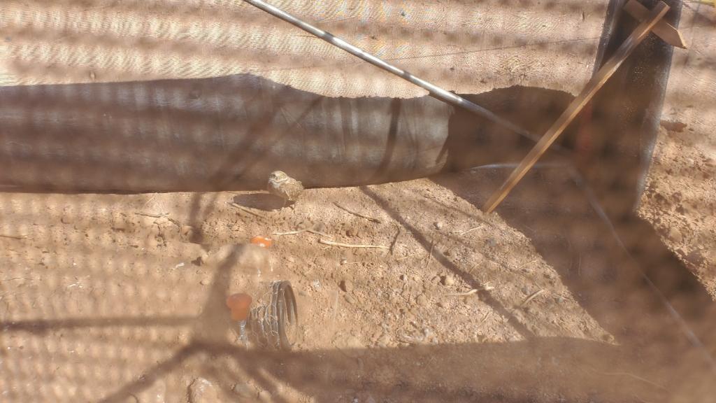 owl under shade cloth