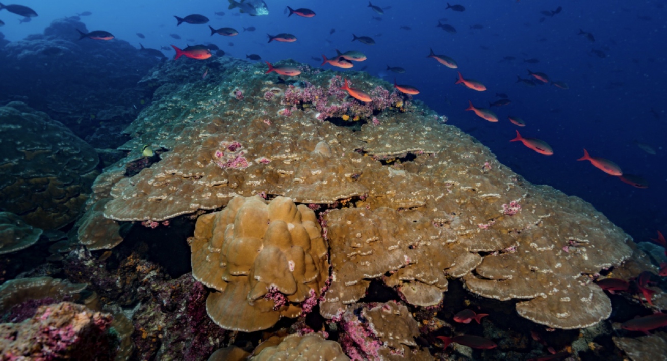 A coral reef in the Galapagos islands