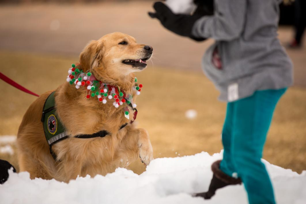 Dogs like playing in snow too.