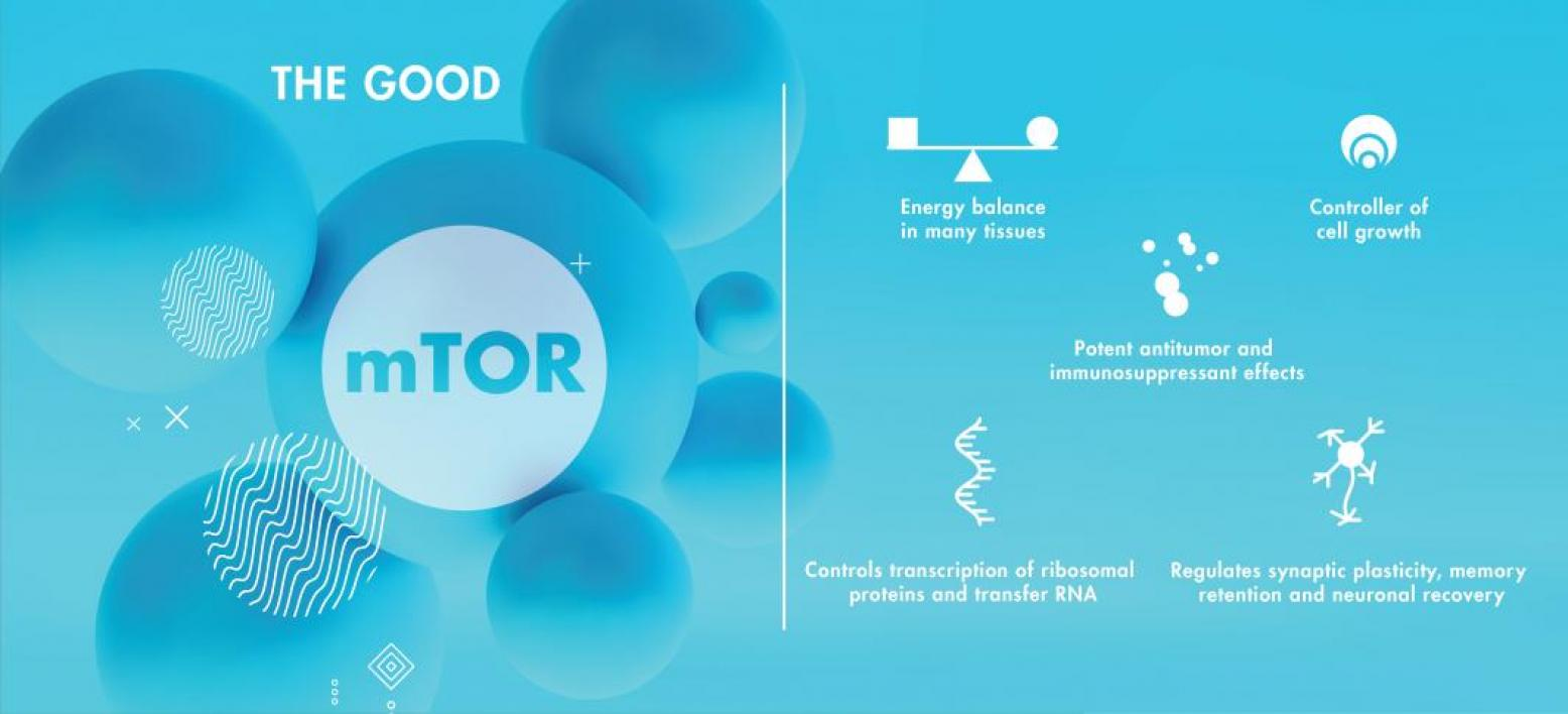 a98967b7 mTOR is a protein complex playing many essential roles in the body.