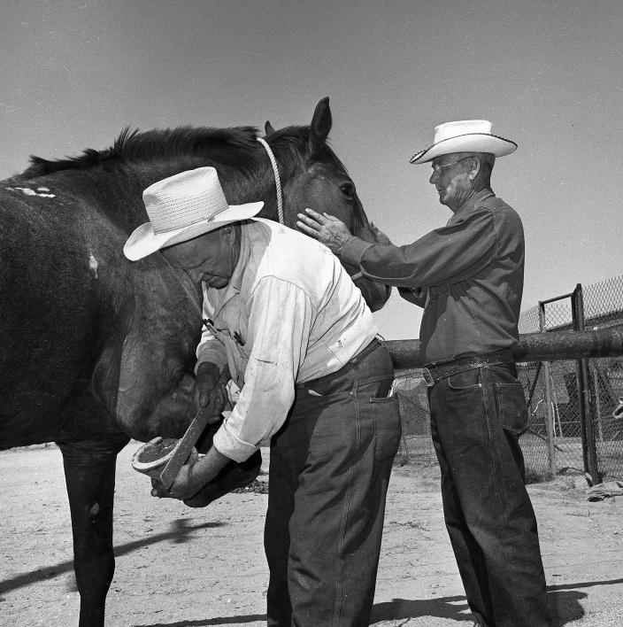man shoeing a horse