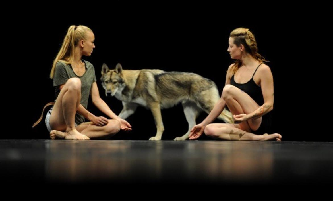 wolf on stage with actors