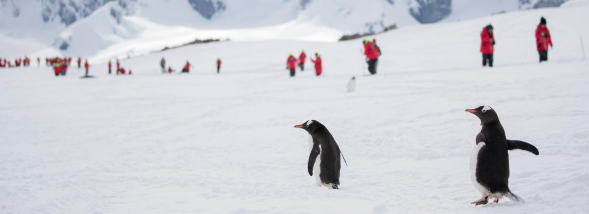 Group of ASU students hiking in the background with two penguins in the foreground in Antarctica