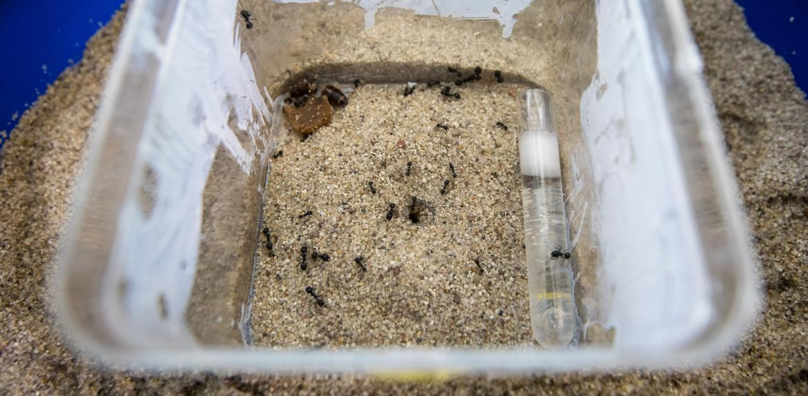 ants in a box in sand