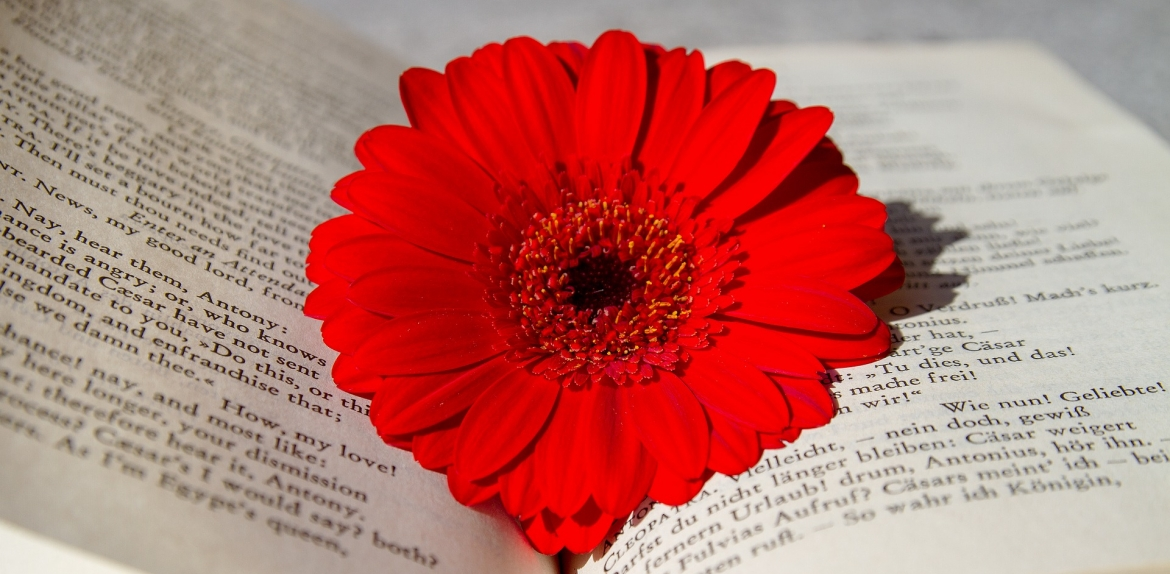 Flower inside of a book